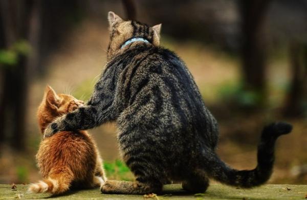 Cat-advising-son.jpg