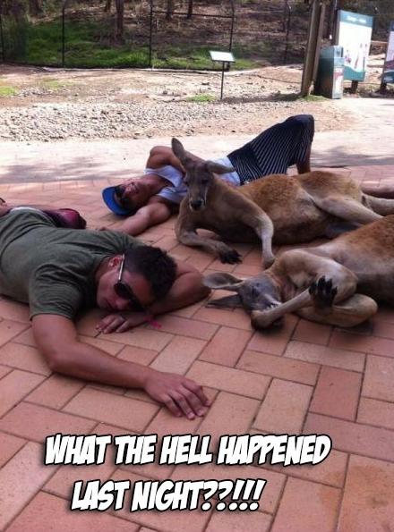 drunk_kangaroos