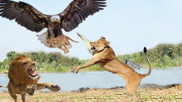 stolen lion